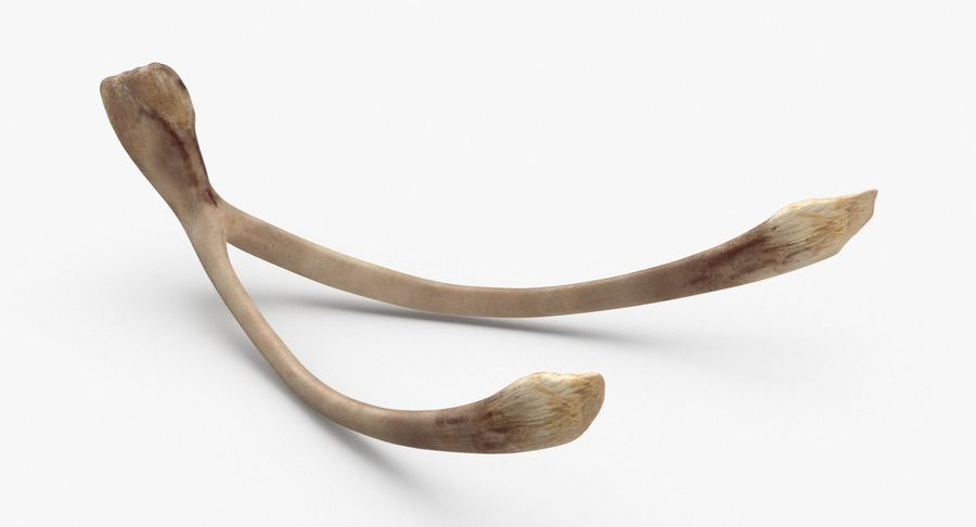 Wishbone royalty-free 3d model - Preview no. 2