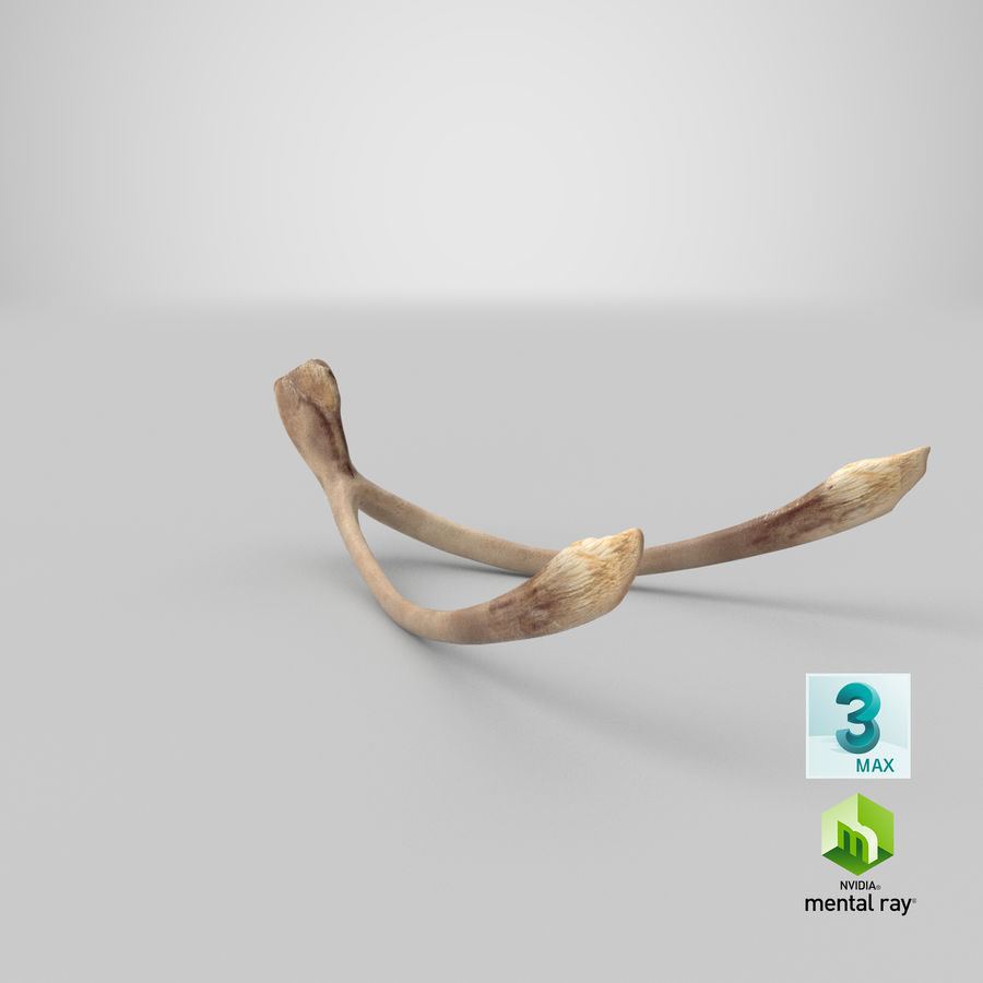 Wishbone royalty-free 3d model - Preview no. 23