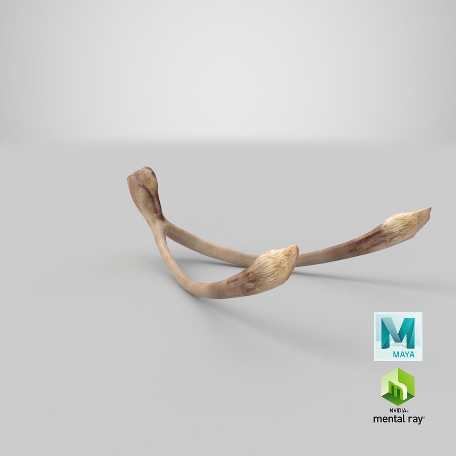 Wishbone royalty-free 3d model - Preview no. 21