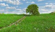 Green Path Meadow 3d model