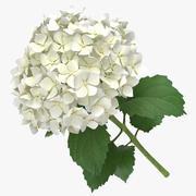 Hortensia - Blanc 3d model