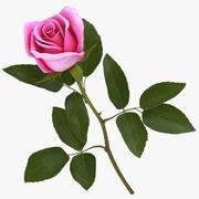 Rosa Rosa modelo 3d