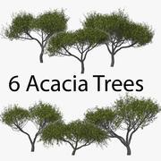 Acacia Pack 3d model