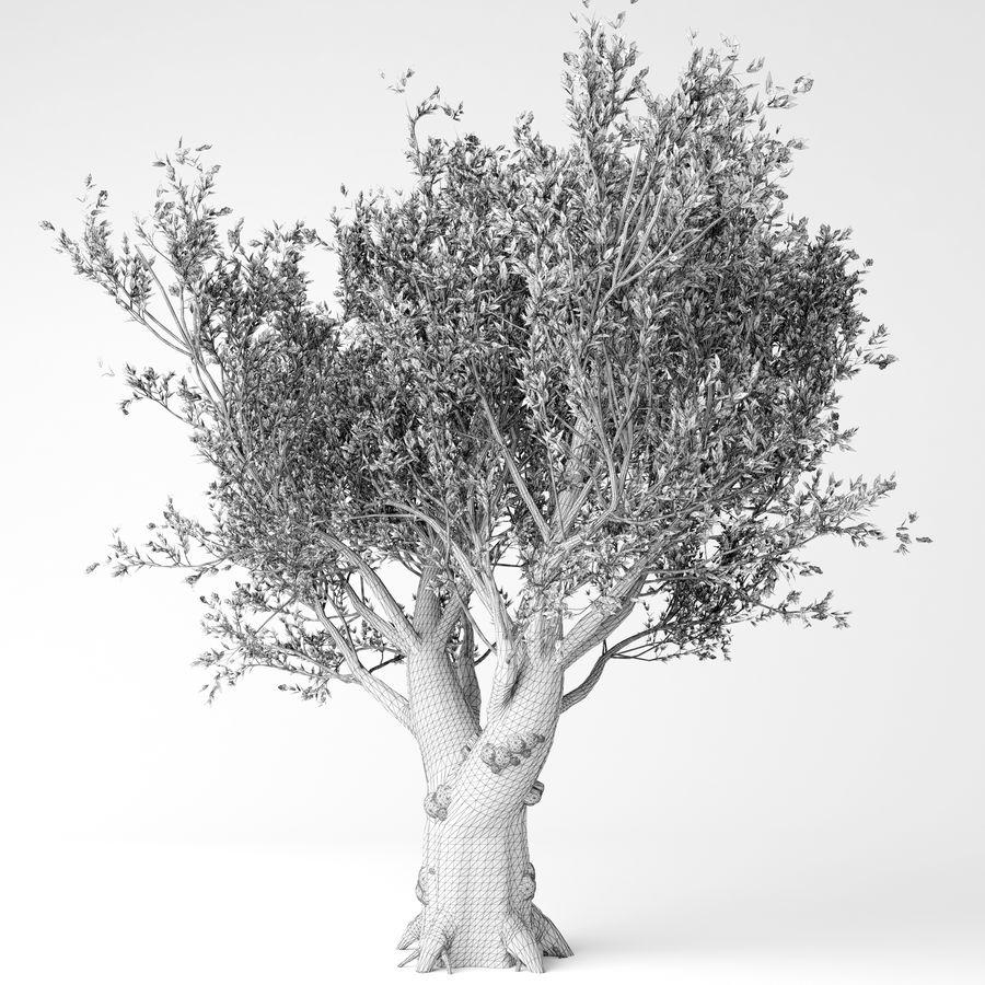 Olijfboom royalty-free 3d model - Preview no. 5