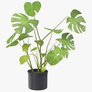 Roślina Domowa 03 3d model