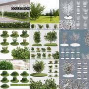 灌木丛和灌木丛 3d model