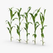 トウモロコシの茎の行 3d model