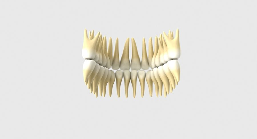 Bouche royalty-free 3d model - Preview no. 22