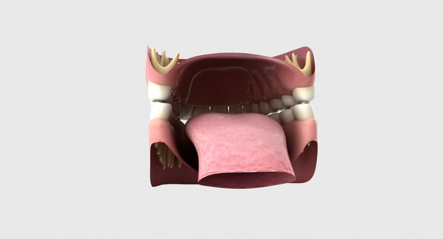 Bouche royalty-free 3d model - Preview no. 18
