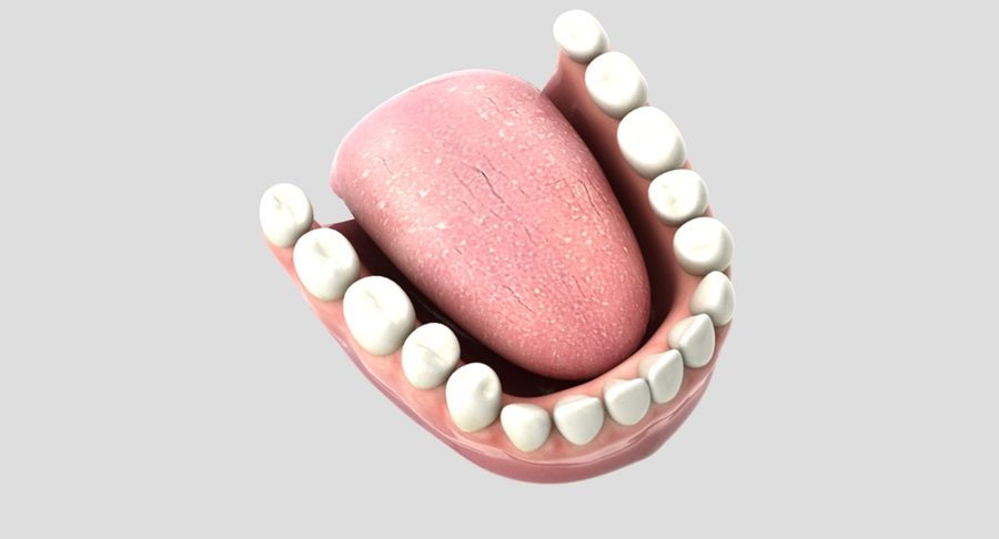 Bouche royalty-free 3d model - Preview no. 8