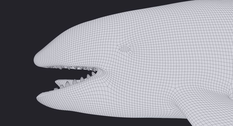 Orca Orca aparejada royalty-free modelo 3d - Preview no. 15