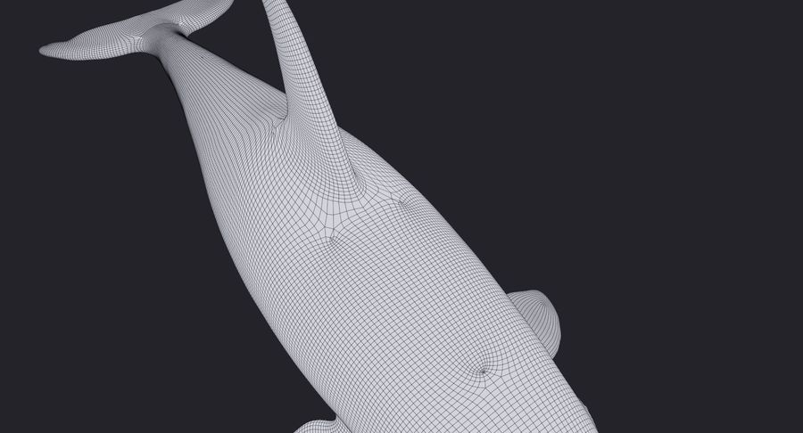 Orca Orca aparejada royalty-free modelo 3d - Preview no. 17