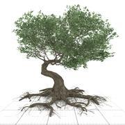 vridna gamla konstiga TREE 3d model
