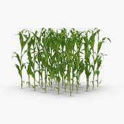 トウモロコシの茎とパッチ-パッチ 3d model