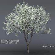 Cerisier en fleurs 01 3d model