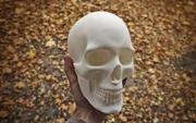 Anatomisch correcte menselijke schedel in 3D-printmodel op ware grootte 3d model