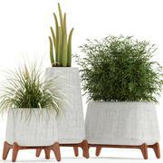 Plants collection 128 indigenus terra 3d model