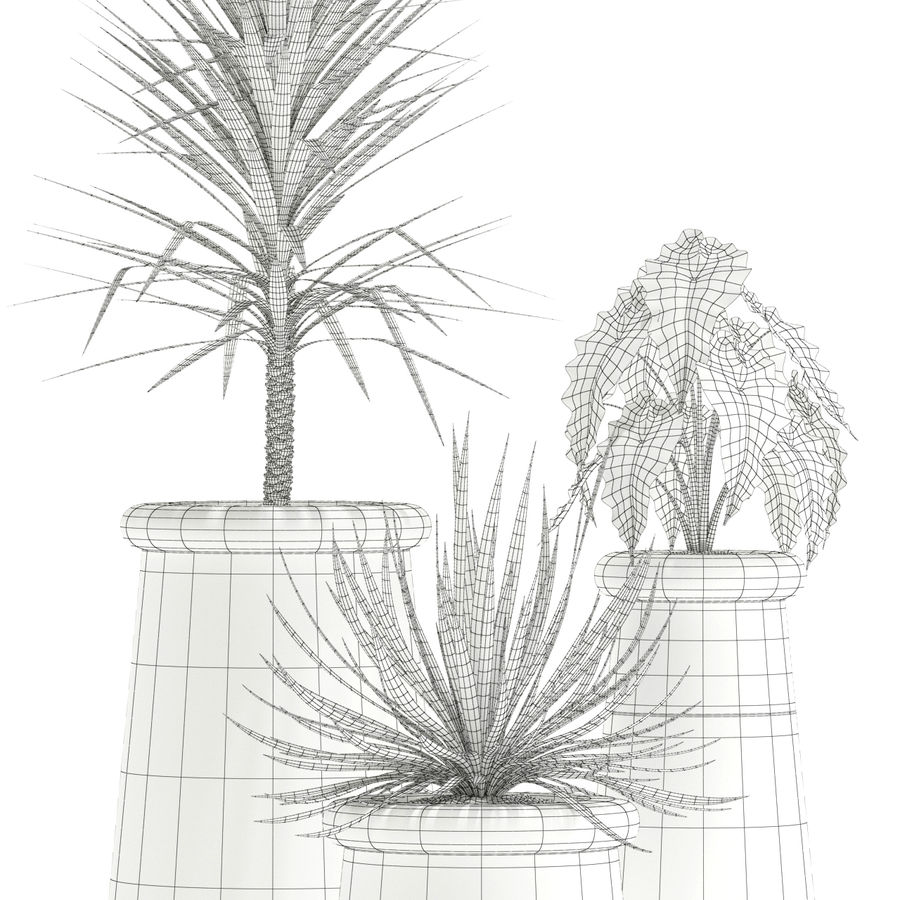 Plants collection 131 indigenus soma royalty-free 3d model - Preview no. 4