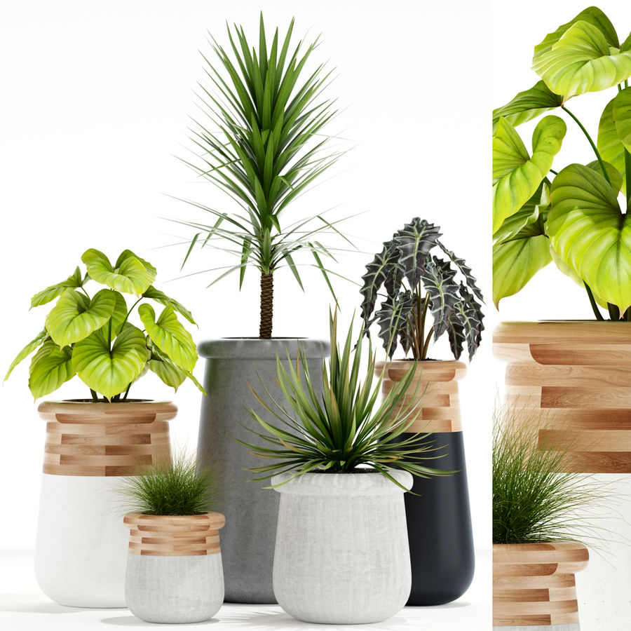 Plants collection 131 indigenus soma royalty-free 3d model - Preview no. 1