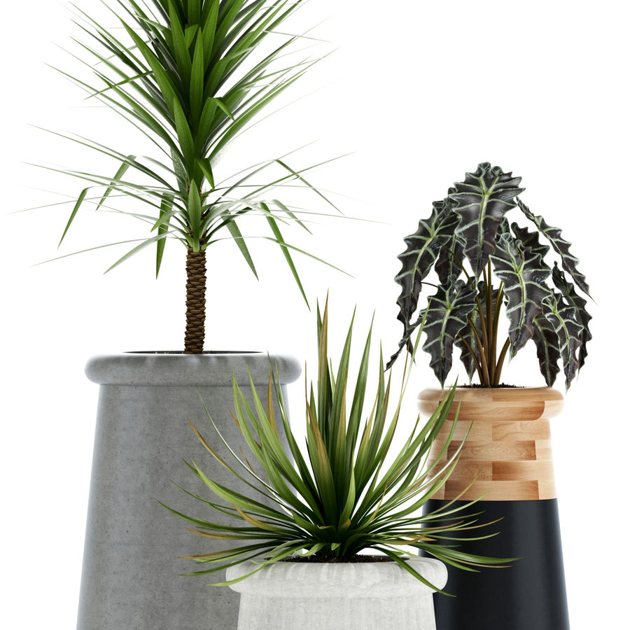 Plants collection 131 indigenus soma royalty-free 3d model - Preview no. 2