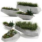 Plants collection 132 indigenus steen 3d model