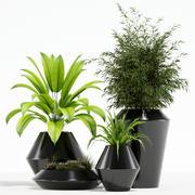 Plants collection 133 Westelm Modern Planters 3d model