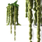 Green amaranthus 3d model