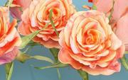 China Chinese roos Rosa Chinensis 3d model