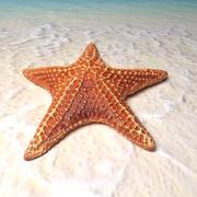 estrella de mar modelo 3d