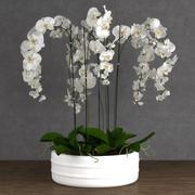 Orquídea 6 3d model
