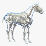 Horse Envelope with Skeleton Neutral Pose 3D Model 3d model