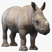 Носорог ребенок 3d model
