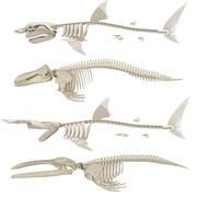 2 valar och 2 hajarskelett 3d model
