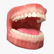 牙齿解剖 3d model