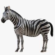 Zebra (Rigged) 3d model