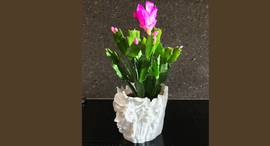 Plant Pot 3d Printed royalty-free 3d model - Preview no. 13