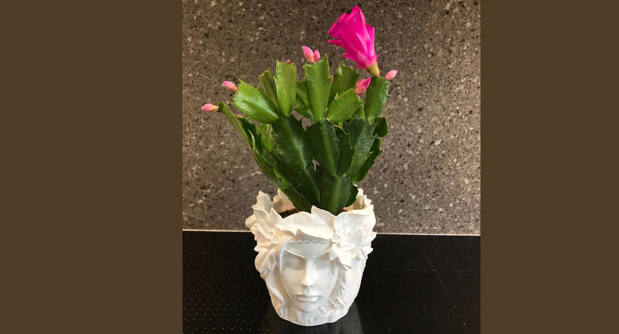 Plant Pot 3d Printed royalty-free 3d model - Preview no. 14