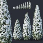 Thuya occidentalis # 10 hiver 3d model