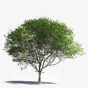 Albero a foglie decidue generico 3d model
