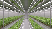 Hydrokultur-Bauernhof 3d model