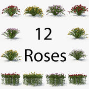 Rose Pack 3d model
