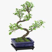 Drzewo Bonsai 02 3d model