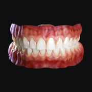人牙 3d model