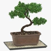 분재 나무 03 3d model