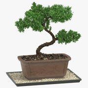 Bonsai Tree 03 3d model