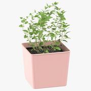 Oregano Herb 3d model