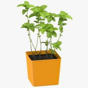 Mint Herb 3d model