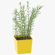 Rosmary Herb 3d model