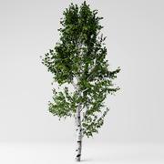 White birch 3d model