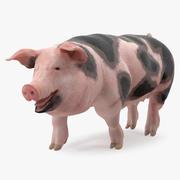 Pig Sow Peitrain Walking Pose 3D Model 3d model